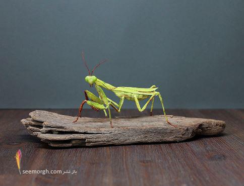 بی نظیرترین و طبیعی ترین اوریگامی از حشرات که تابحال دیده اید!