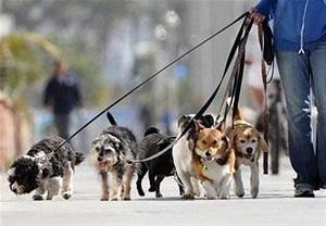 مُد جدید؛ واردات حیوانات خانگی از روسیه