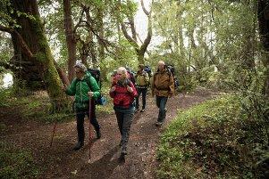 راه ساده برای کاهش استرس با کمک جنگل!