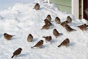 روش هایی برای تقویت بدن در زمستان